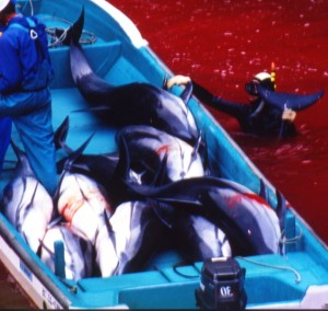 Dolphins killed in Taiji Cove
