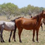 Lake Gregory horses Photo: Libby Lovegrove
